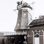 1976: het riet van de molenromp is weer hersteld
